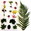 Learn Eco printing with botanicals